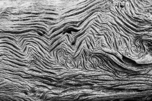 Wood driftwood