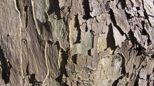Wood peeling bark