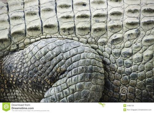krokodilhaut-4485726