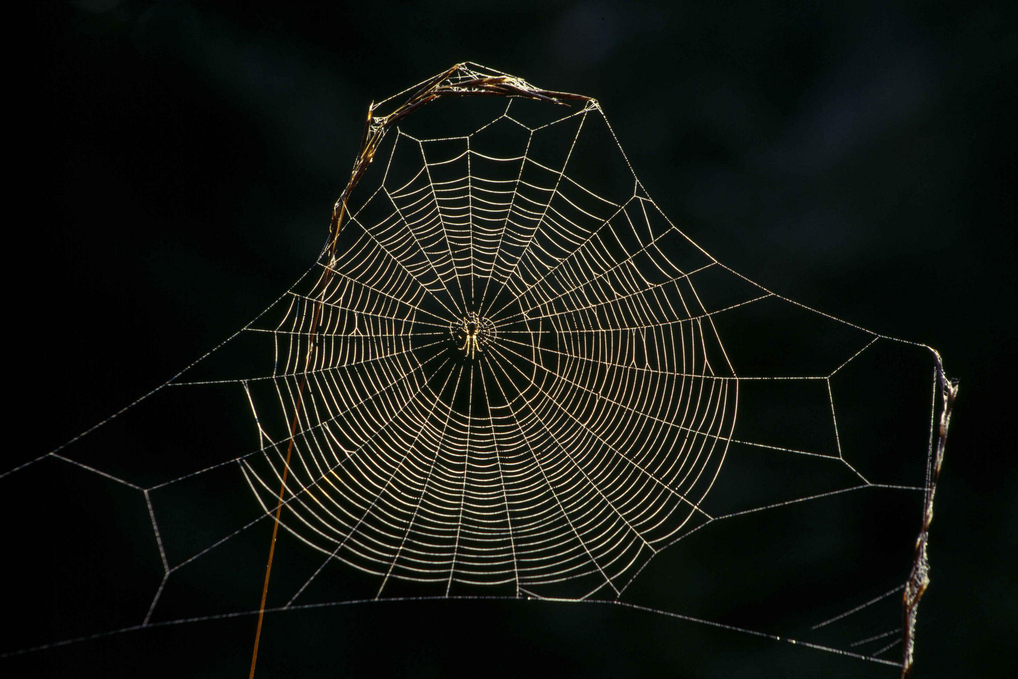 Spider Web – PORCELAIN EVOLUTION LAB